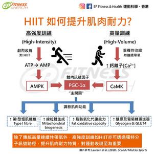 【HIIT 訓練】如何提升肌肉耐力?
