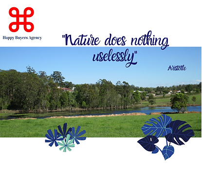 Aristotle in Wauchope.png