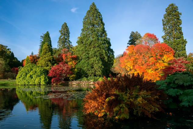 Sheffield Park Autumn .jpg