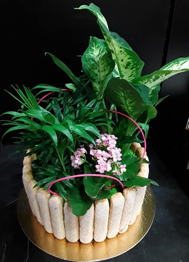 Gateau de plante