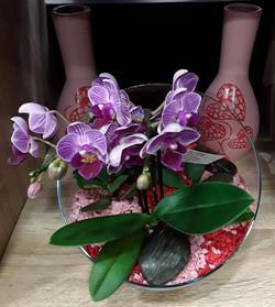 Compo orchidées
