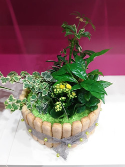Gateau de plantes