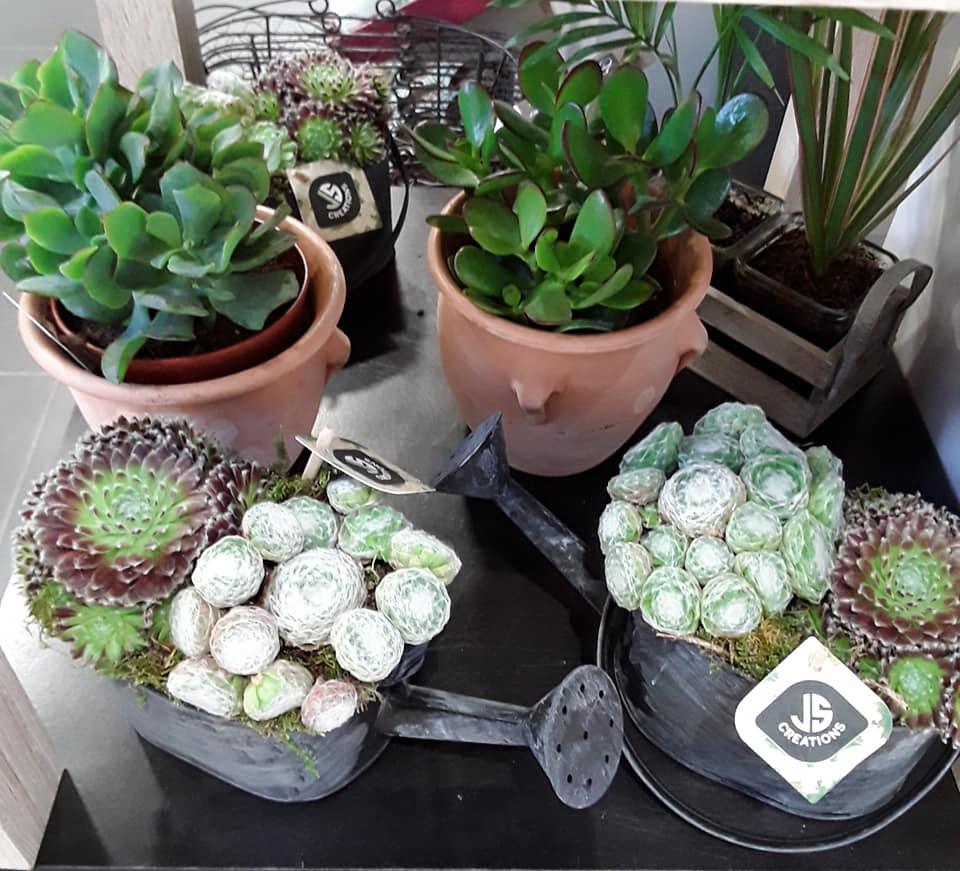 Compo de plantes