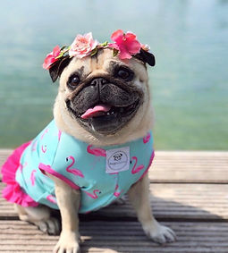 FlamingoSwimsuit2_edited.jpg