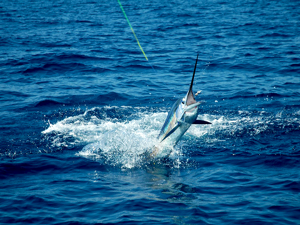 Costa Rica Sports Fishing 6.JPG