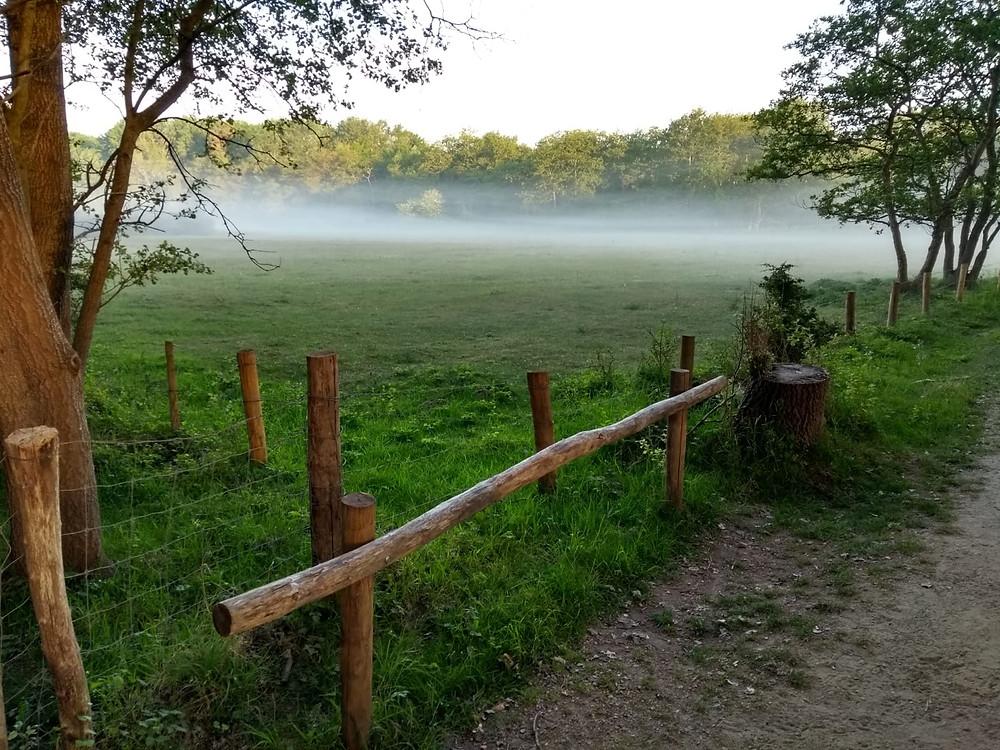 Prachtig uitzicht in de vroege ochtend!