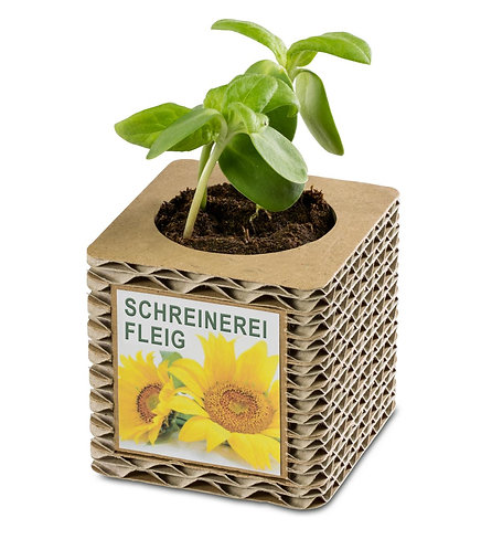 Pflanzenwürfel aus Wellkarton