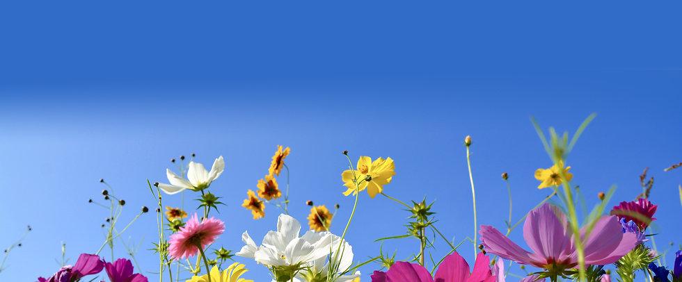 Werbeartikel Blumenwiese 2020.jpg