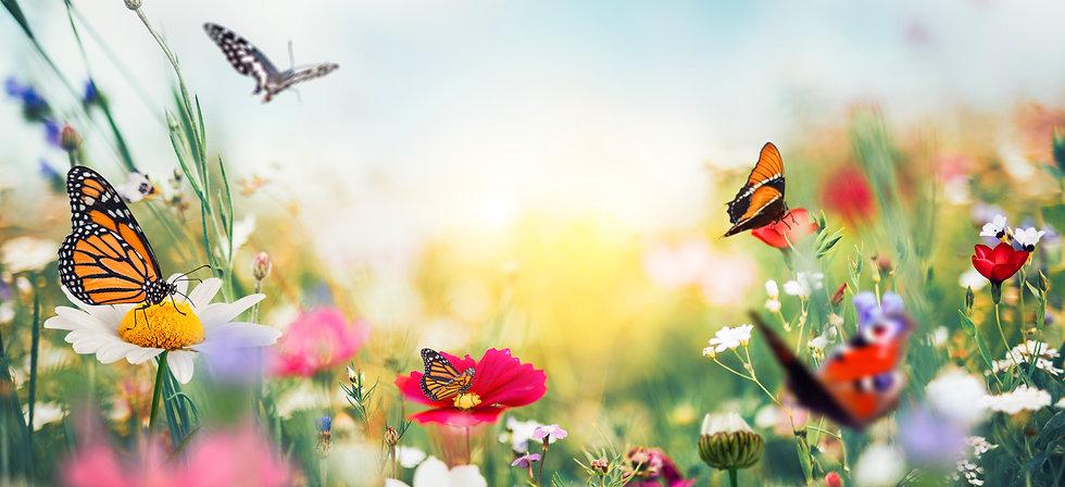 Werbeartikel_Frühling_Schmetterling.jpg