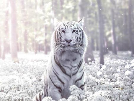 Beli tigri z Antaresa