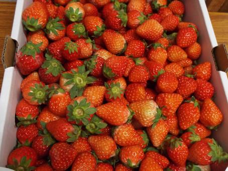 ☆阿蘇のイチゴ大量に入荷中です☆