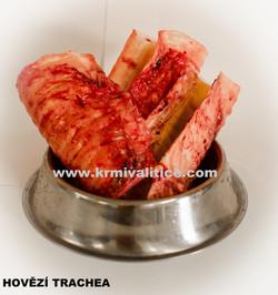 trachea 1