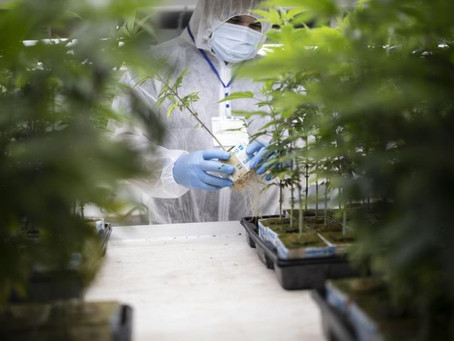 Newly Introduced Cultivation Bill Aims To Kick New York's Adult-Use Cannabis Program Into High Gear