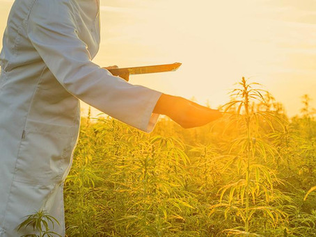 """The USDA has finally addressed """"hot hemp."""" The decision is great news for the hemp industry."""