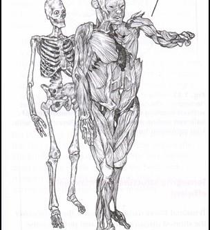 Descobrindo sobre nosso corpo: a FÁSCIA