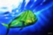 mahi mahi fish a.jpg