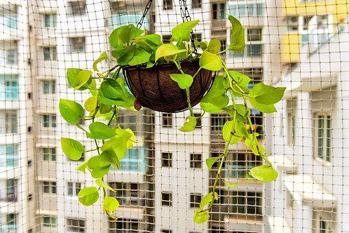 Plants for Coir Hanging Basket