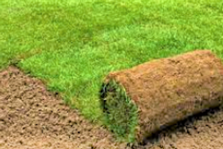 Mat Grass Lawn
