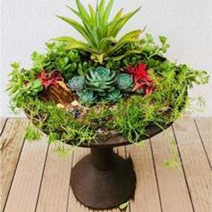 Bird Bath with Plants