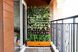 Natural Vertical Garden –  Portable with Wooden Skirting and Wheels