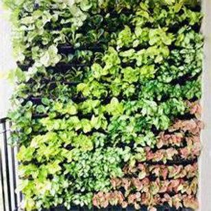 Natural Vertical Garden-Wall Mounted