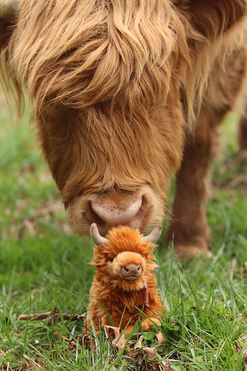 Medium Highland cow plush