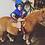 Thumbnail: Pony Lesson