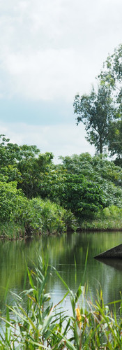 Freshwater Wetland