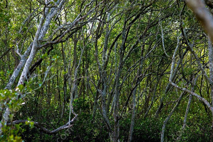 Gold Coast marshland