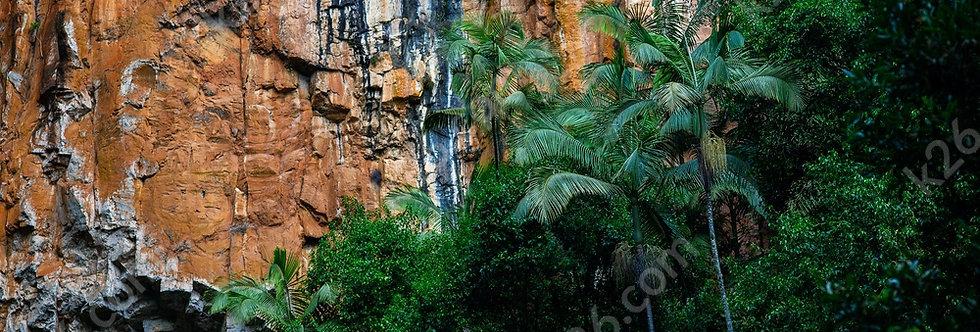 Purlingbrook Falls palms