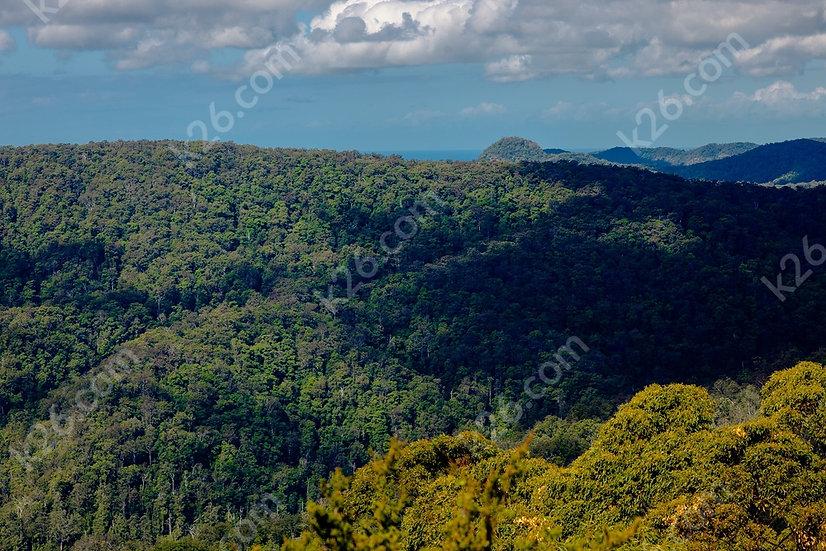 Hinterland forest