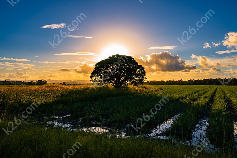Norwell sunset