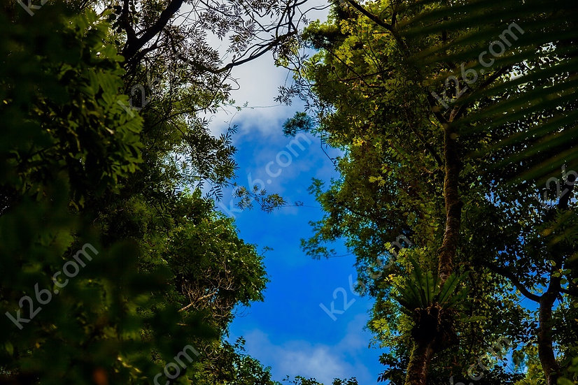 Looking up in a rainforest