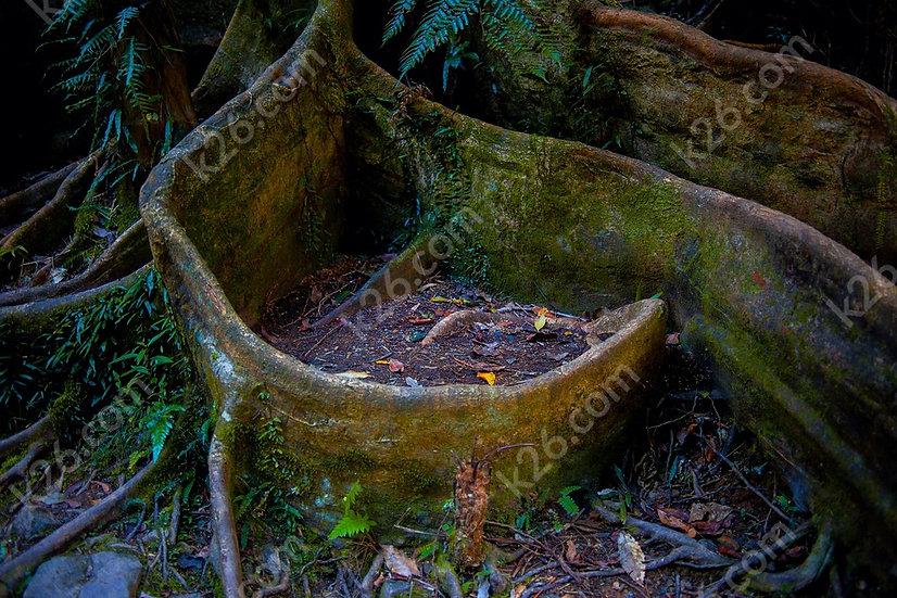 Well, it's a tree base!