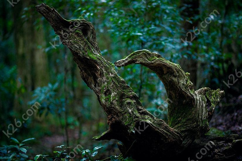 Hinterland fallen tree