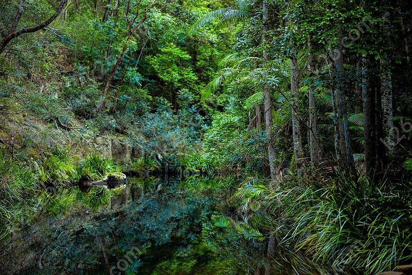 A creek in Beechmont