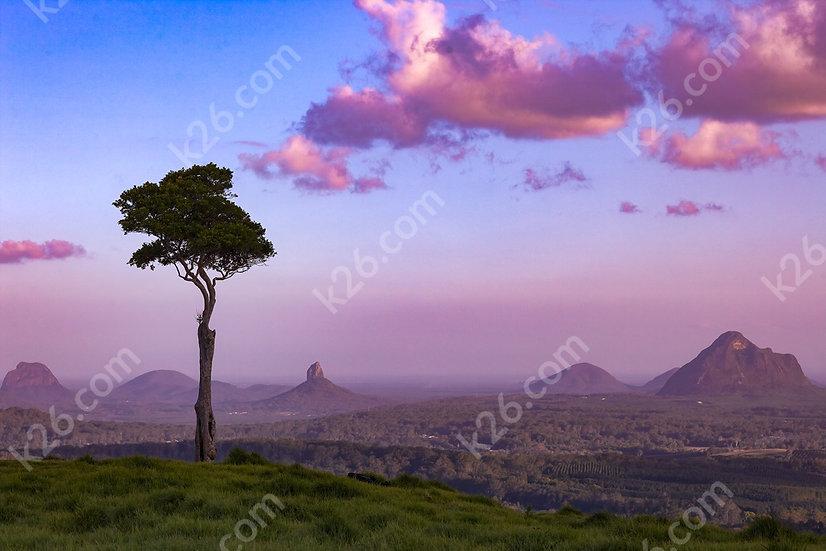 Cherry tree vista at sunset