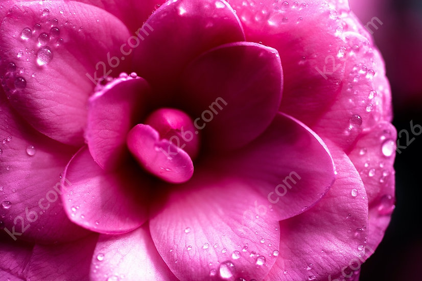 Macro on a flower