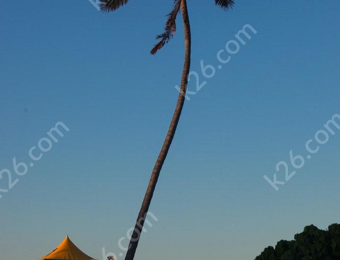 Main Beach palm trees at sunset