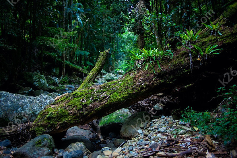 Fallen log at Gorge Falls