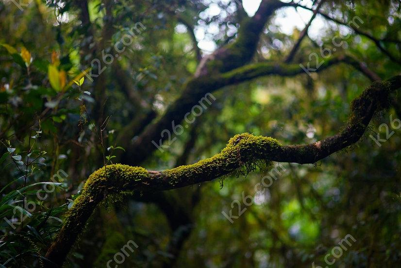 Rainforest greenery