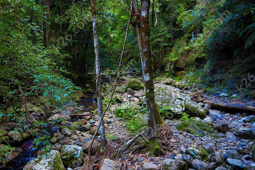 Gold Coast hinterland track