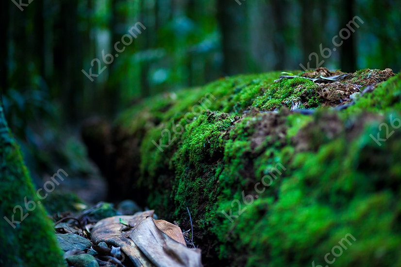 Moss-covered log