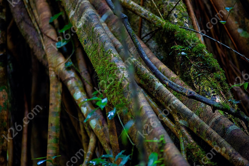 Rainforest trunk