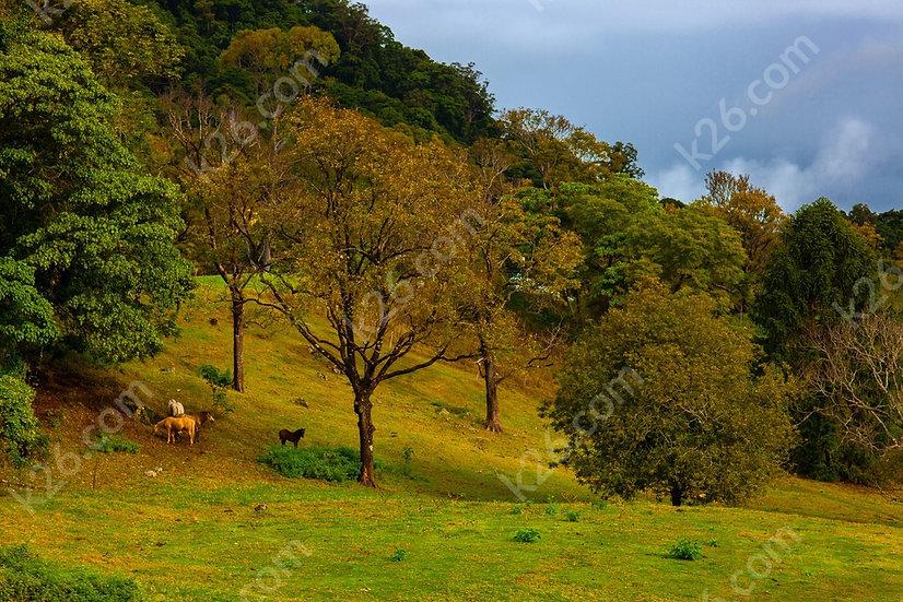 Hinterland horse