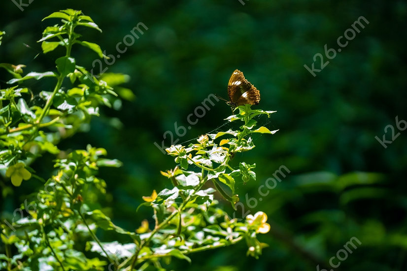 Resting butterfly