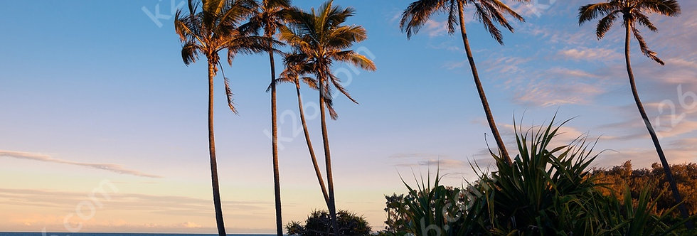 Palm trees over the Coral Sea