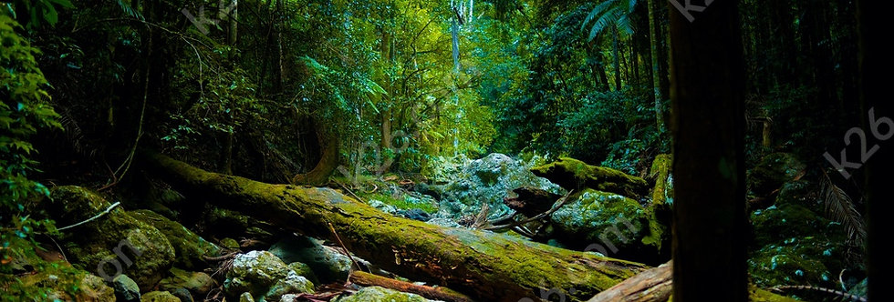 Gorge Falls trail