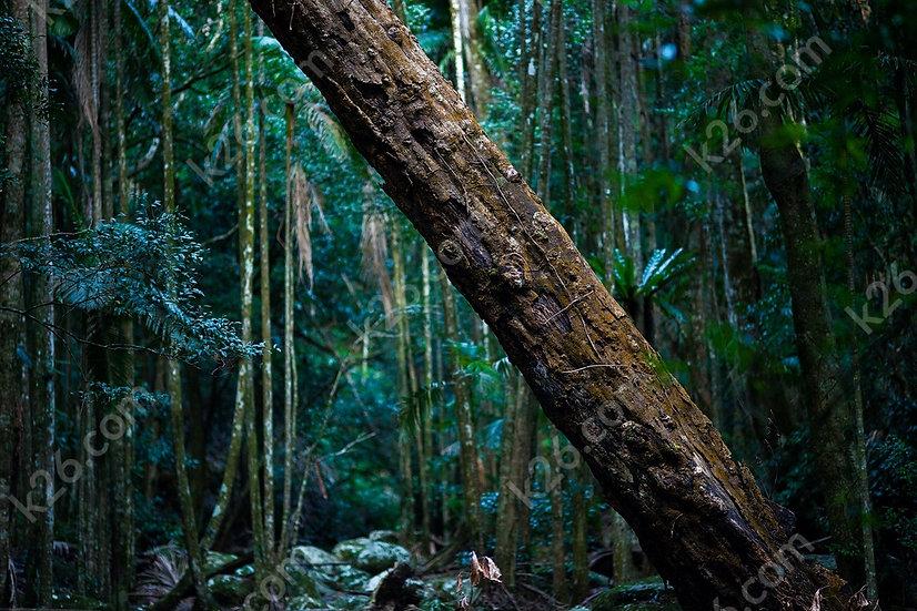 Rainforest log