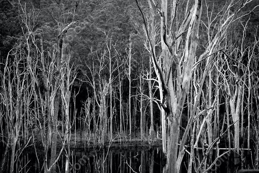 Advancetown Lake